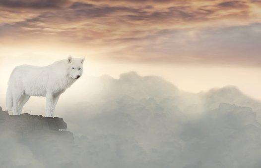 一匹の白い狼