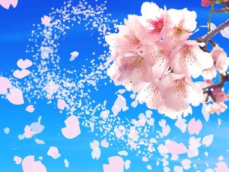 春風に舞う桜