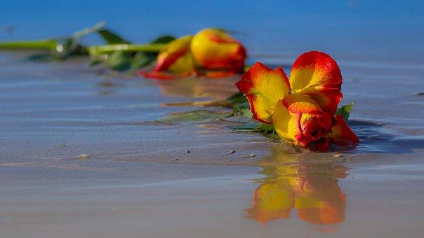 海岸でしおれたバラ