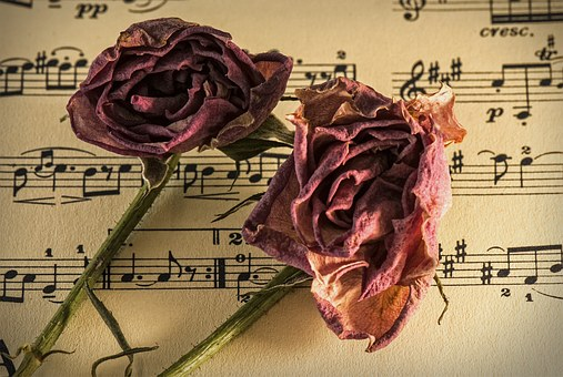 枯れた2本のバラ