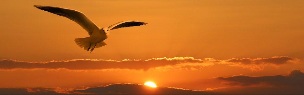 夕焼けの空を飛ぶカモメ