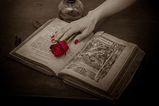 赤いバラと本