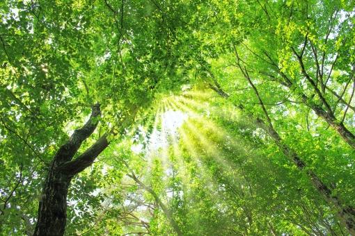 美しい木漏れ日