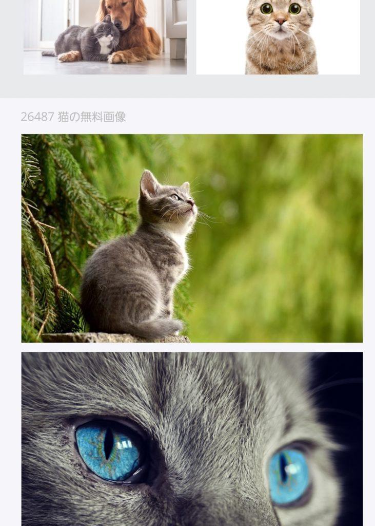 可愛い子猫の画像