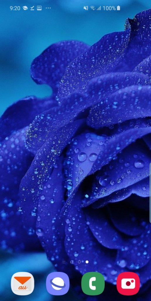 青い薔薇を待ち受け画像に設定