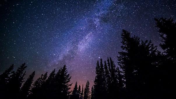 森の中から見上げる美しい夜空