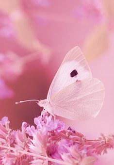 モンシロチョウとピンクの花