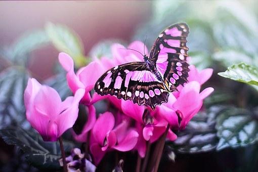 ピンクの花と蝶々